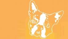Snarky Puppy2